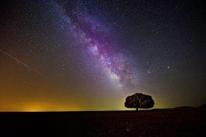 tree under purple night sky