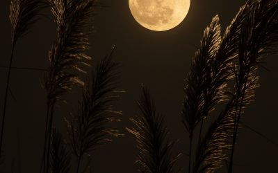 The Harvest Full Moon is in Aries